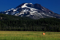 Morning at Sparks Meadow with South Sister as backdrop. Deer enjoys the view.