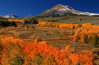 2011 Fall colors in the Eastern Sierras
