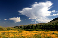 Dramatic cloud formations over a field of wildflowers