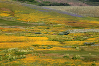 Wildflower display at the higher elevation